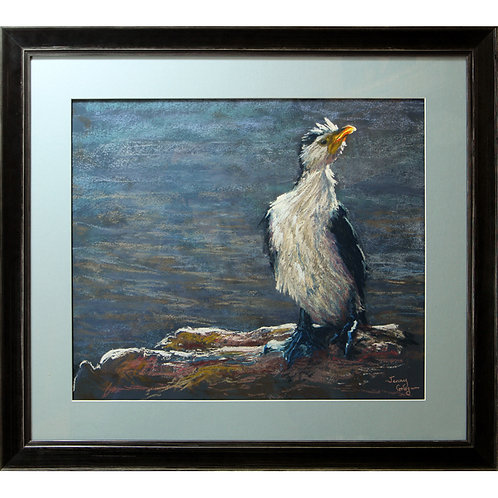 """Little pied cormorant"" Pastel. 20 x 17 inches."