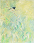 Pastel Painting: Blue wren on a twig