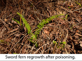 Our rainforest garden:  Weeds and Terrible Weeds