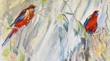 Pastel Painting: Crimson rosellas