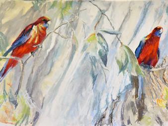 Pastel Painting: Crimson rosellas