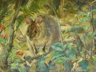 Pastel painting: Pademelon in the undergrowth