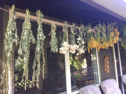 Different herbs drying