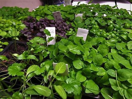 herbs for website.jpeg
