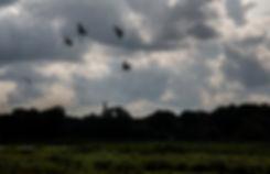 More August Birds 8.19 web.jpg