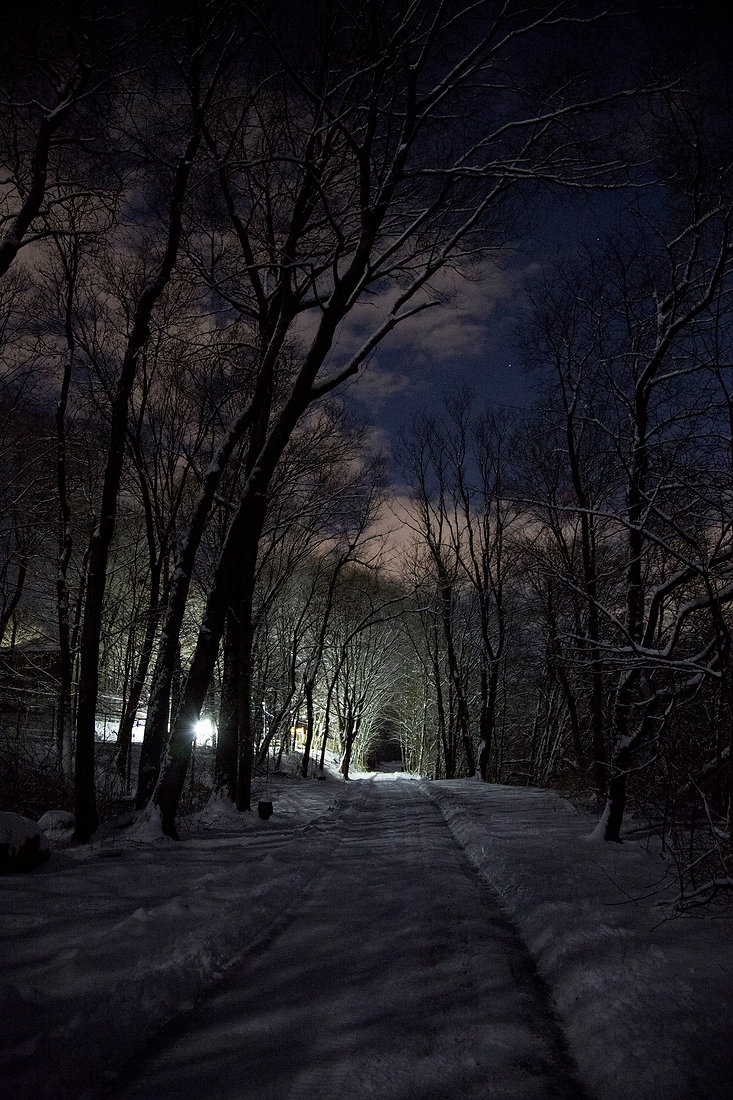 Pathway After the Night Snow website.jpg