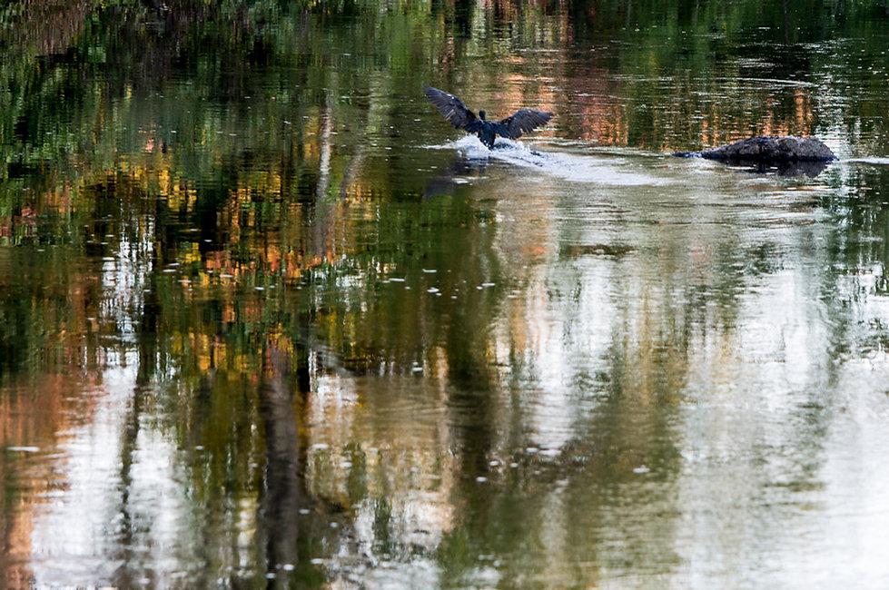 Neponset Bird Landing.jpg