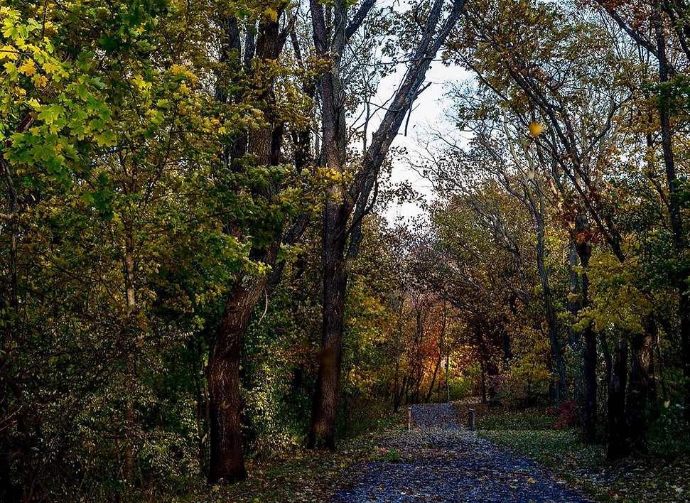 Fall Colors Extension Pathway web.jpg