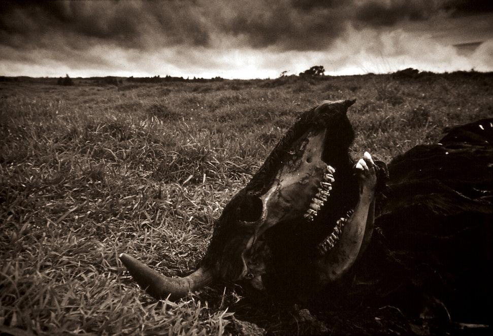Death In The Field 1 RGB website orig.jp
