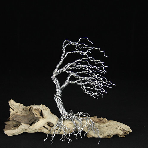 10in Wind Blown Bonsai Tree on Driftwood #12116