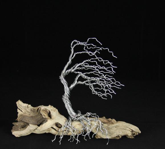 Wind-Swept Tree on Driftwood