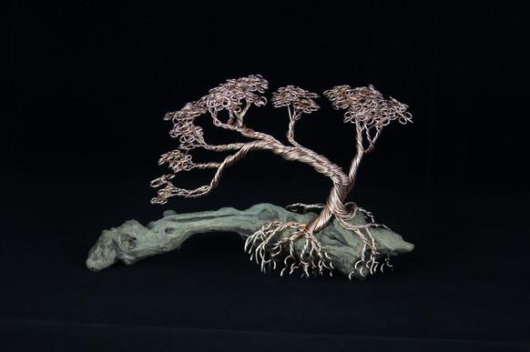 Bonsai Tree on driftwood