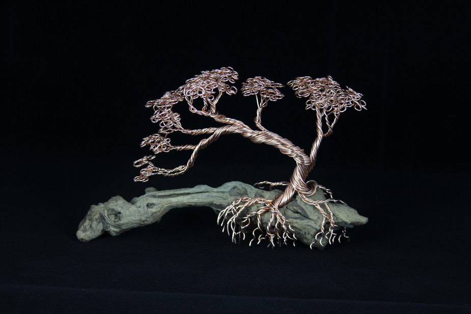 Bonsai Tree on driftwood