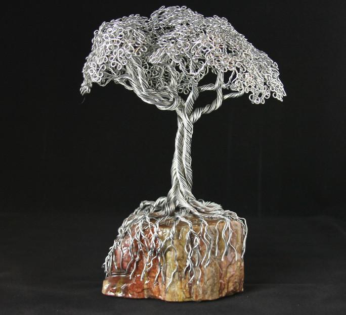 Arizona Rainbow Tree