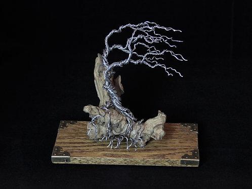 Wind Blown Bonsai Tree on Driftwood #12260