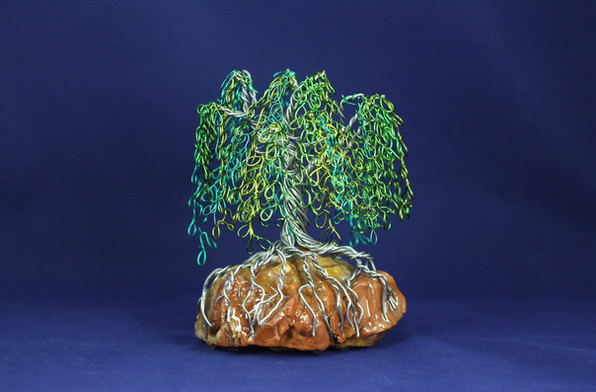Willow Tree on Petrified Wood