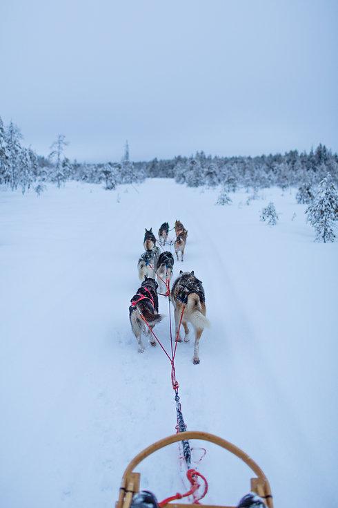 husky tour in syöte national park