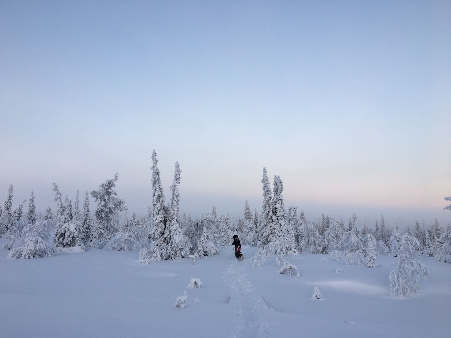Winter view in South Lapland