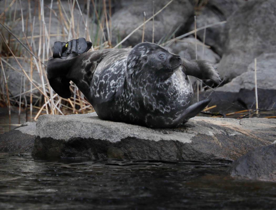 Saimaa ringed seal kayaking & photographing tour