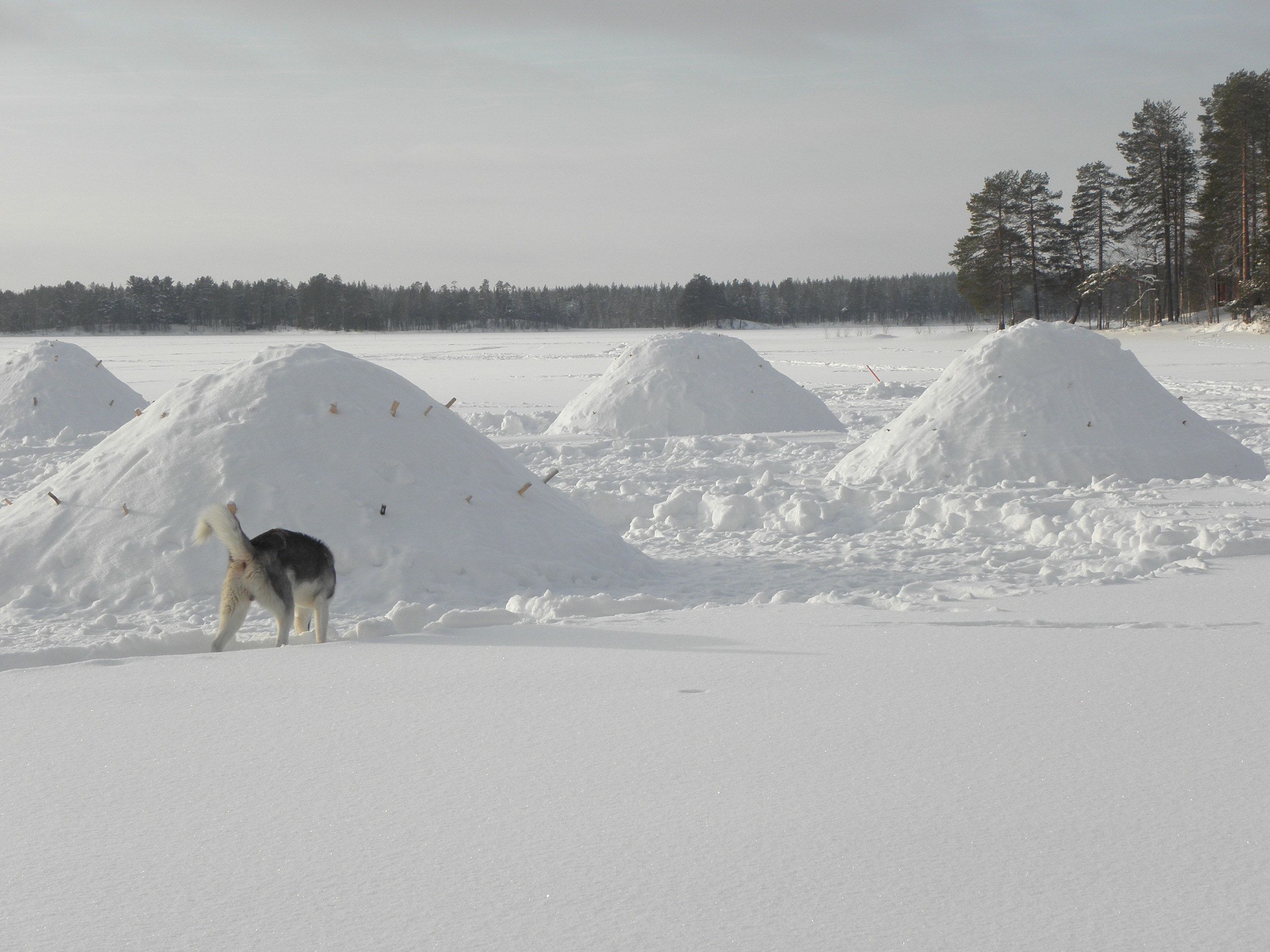 Snowshelters on the ice