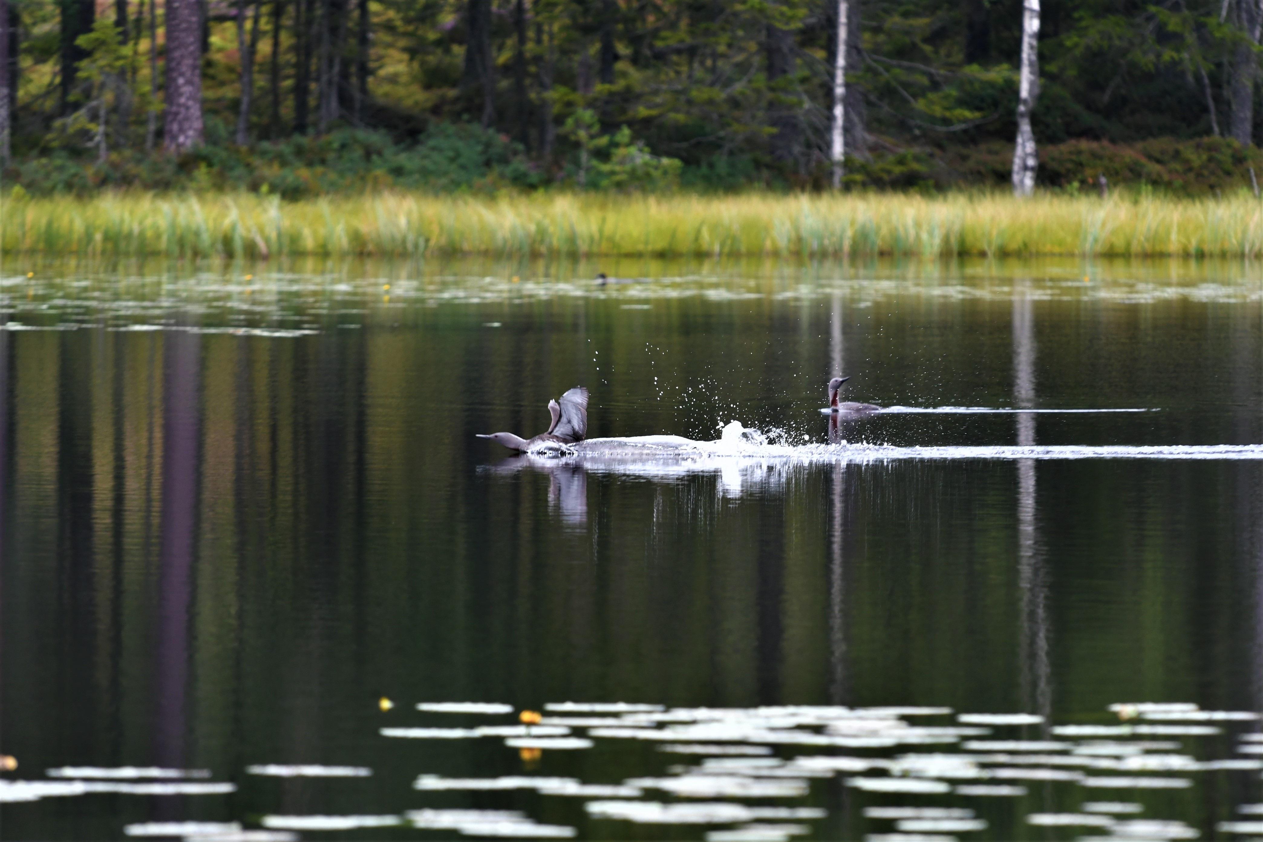 bird-photography-tours-finland