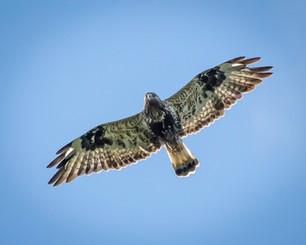 birdwatching tours finland