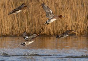 birdphotographing tours south lapland