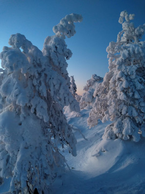 winter trees in syöte national park