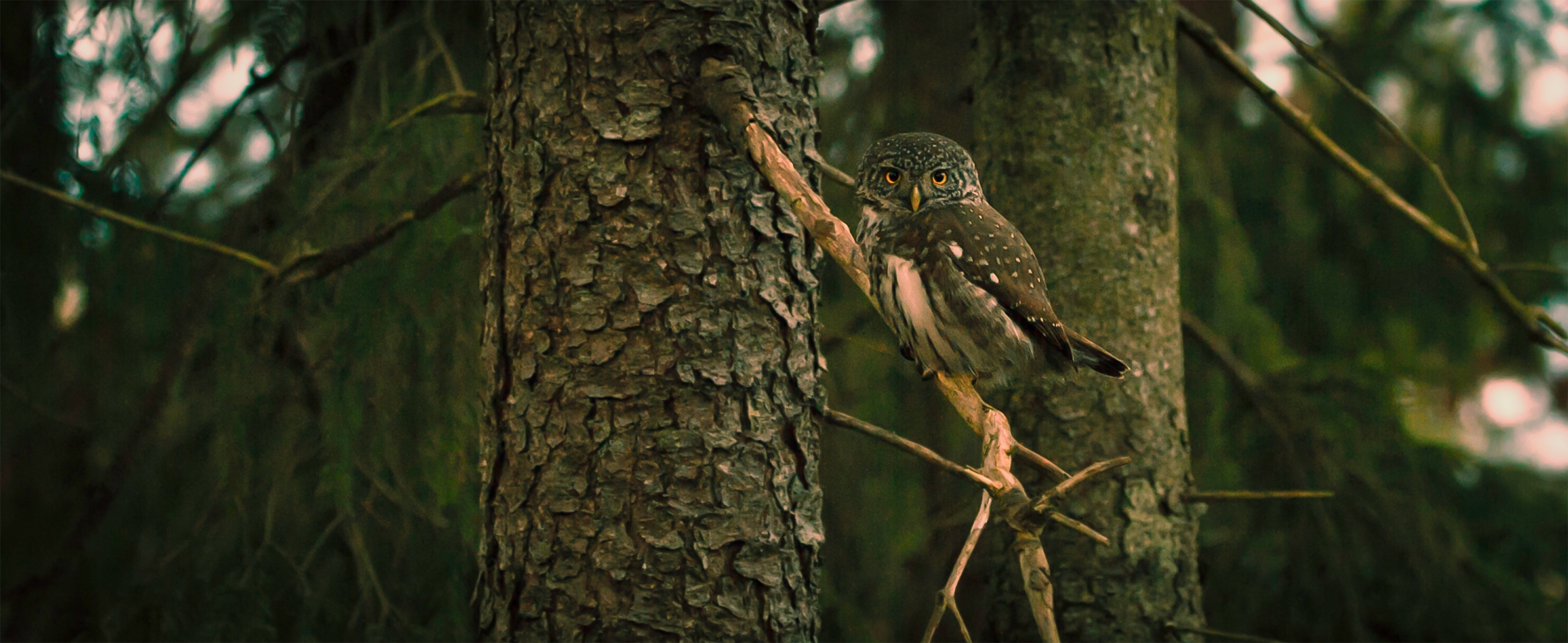 owl-photographing-tour-south-lapland