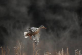 birdphotographing tours finland