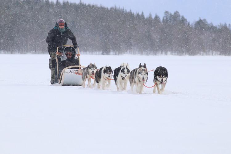 Huskies in South Lapland