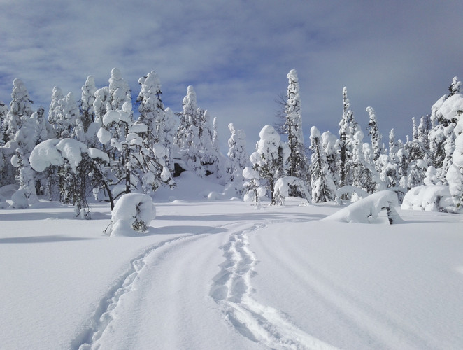 Snowshoeing tracks in South Lapland