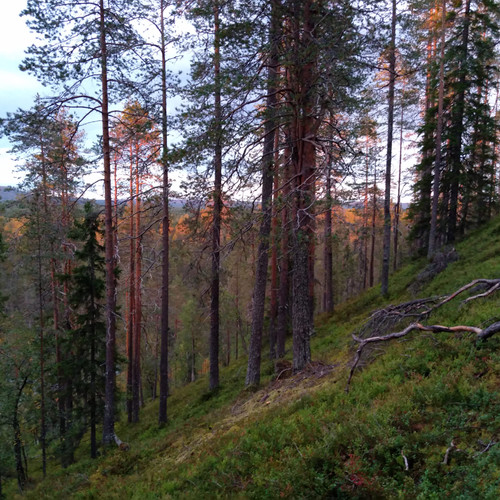South Lapland hiking tour in Finland