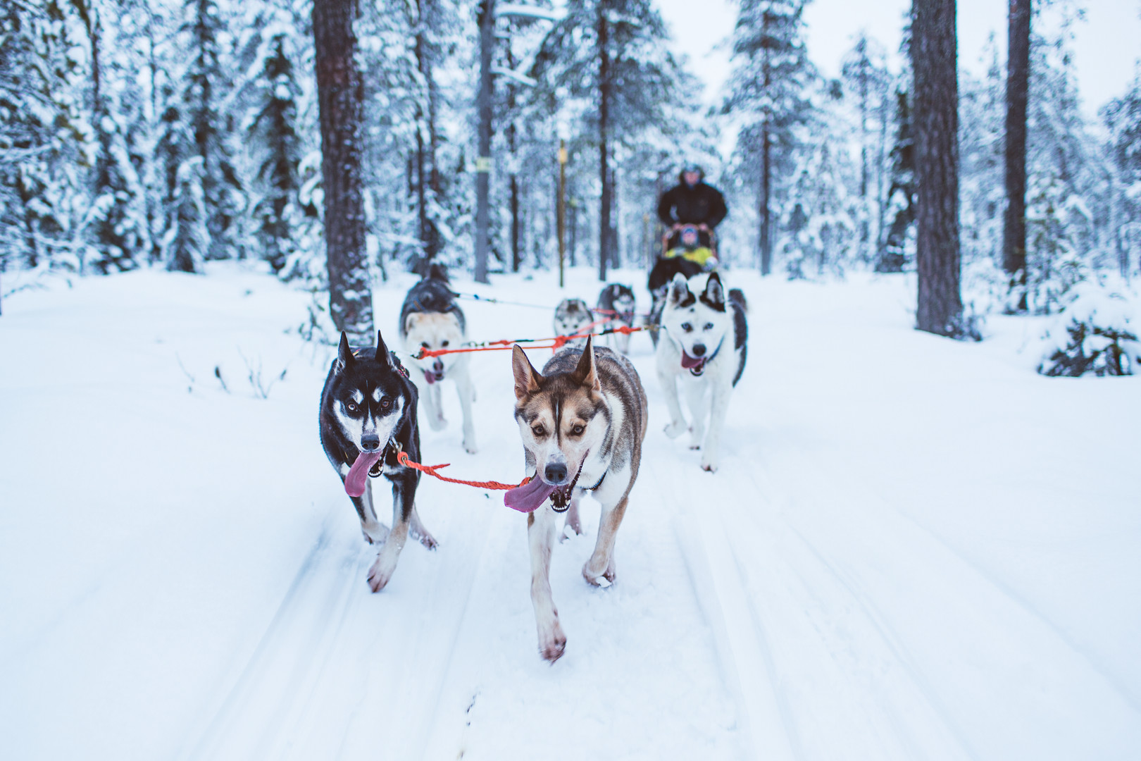 Husky tour in South Lapland