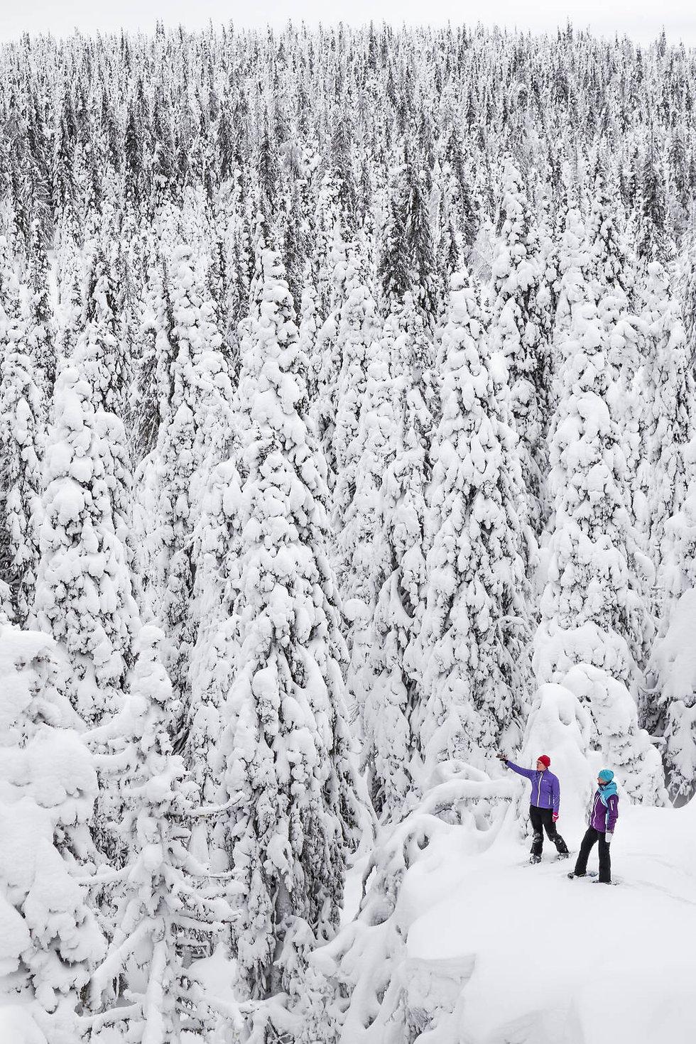 Snow-covered-forest-in-SyöteNP.jpg