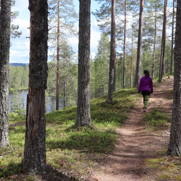 Hiking woman in South Lapland