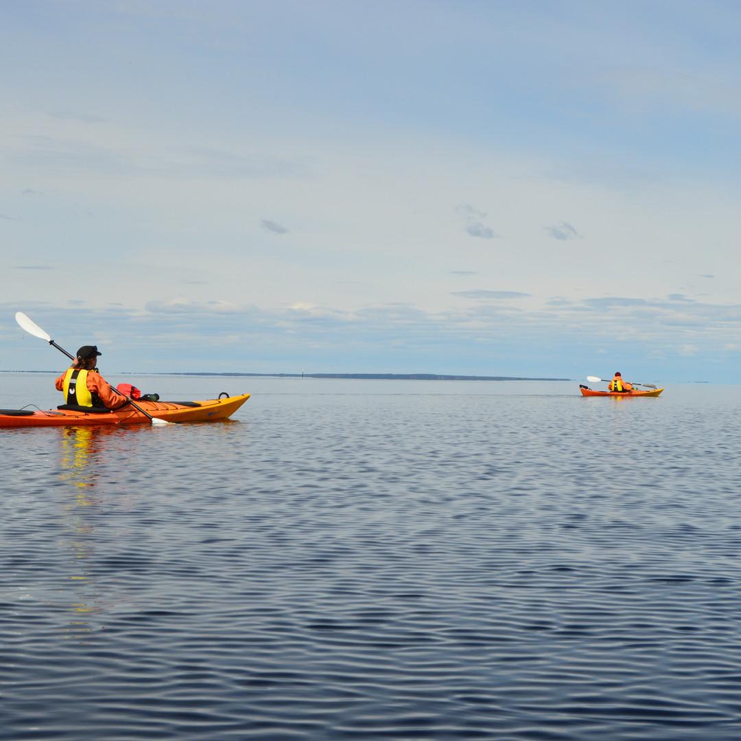 Saimaa ringed seal kayaking & photographing tour in Oravi