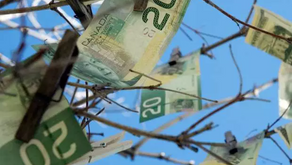 Muskoka residents are you growing your money tree? Taxes might increase to fund two new hospitals