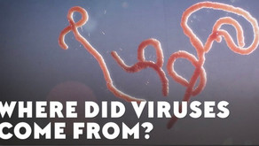 Fun Fact: No one knows where Viruses came from but life could have originated from them