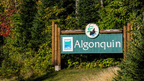 FUN FACT; Algonquin Park is one and a half the size of PEI and larger than a US state.