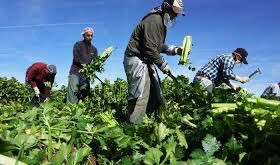 Simcoe Muskoka Health Unit issues order to employers of farm workers to reduce Covid spread