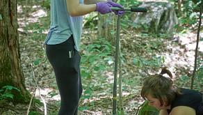 A one of a kind calcium restoration field study has begun in Muskoka's sugar bushes