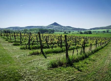 O vinho sustentável