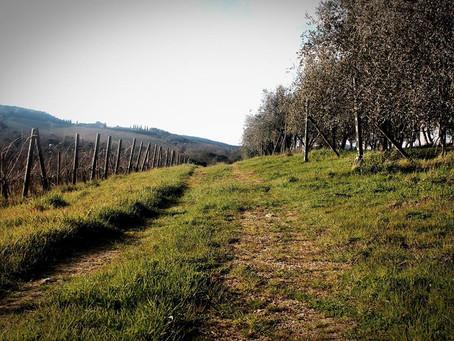 O Vinho Biodinâmico