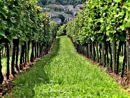 O Vinho Orgânico