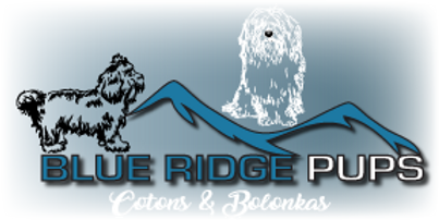 blue ridge pups logo with a coton and bolonka