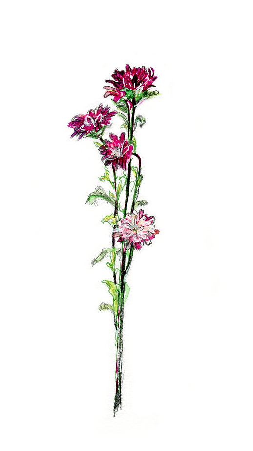 tige 4 fleurs.jpg