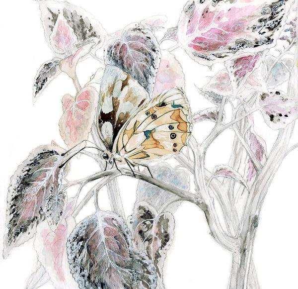 Papillon fond blanc'.jpg