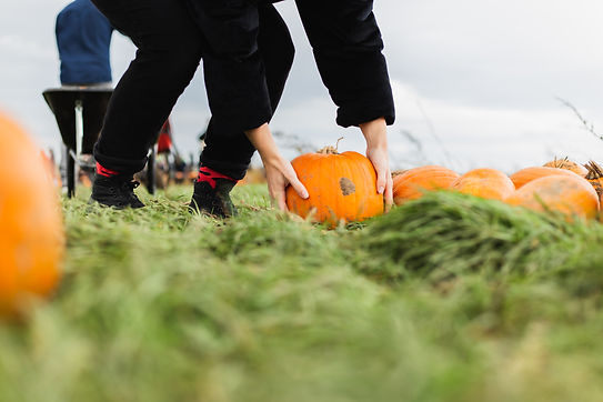 shorne-pumpkin-46.jpg