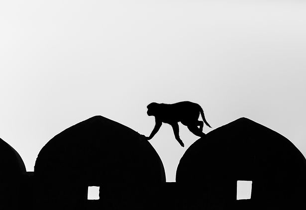 monkey silhouette.jpg
